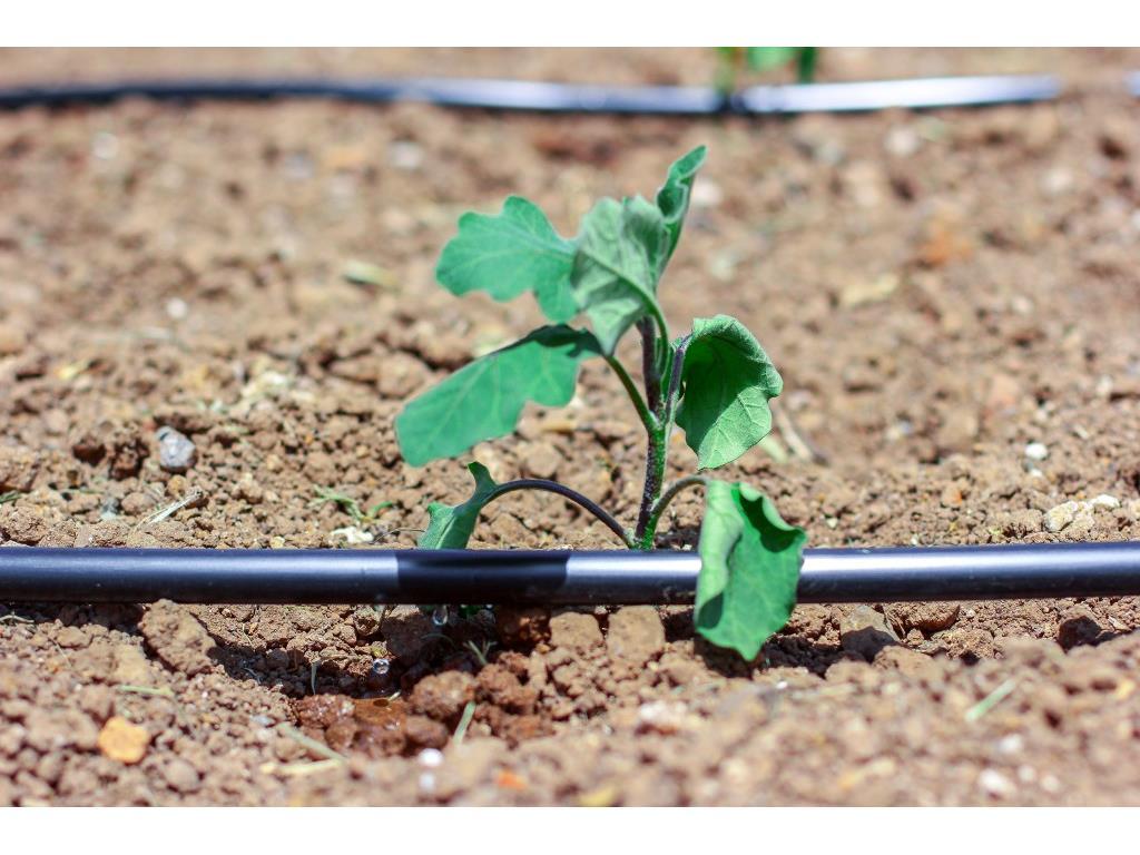 Kit per irrigazione orto domestico easy green in vendita for Kit per irrigazione a goccia